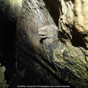 L'iguane de Siech